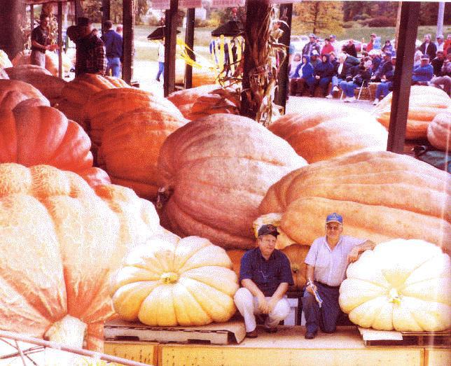 michelmersh-and-timsbury-pumpkin